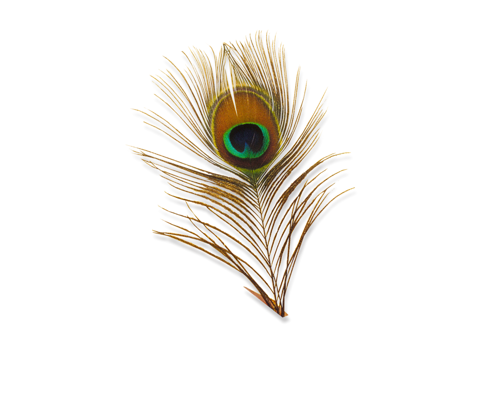 Download Peacock Feather PNG HD.