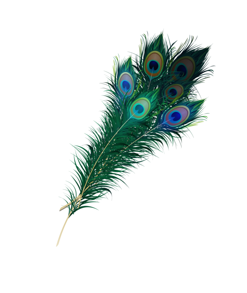 Peacock Feather Png (+).