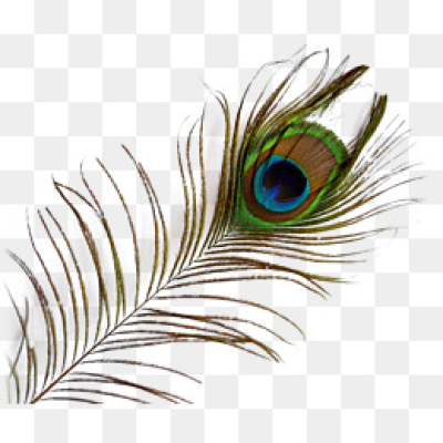 Download Free png Peacock Feather PNG Images.
