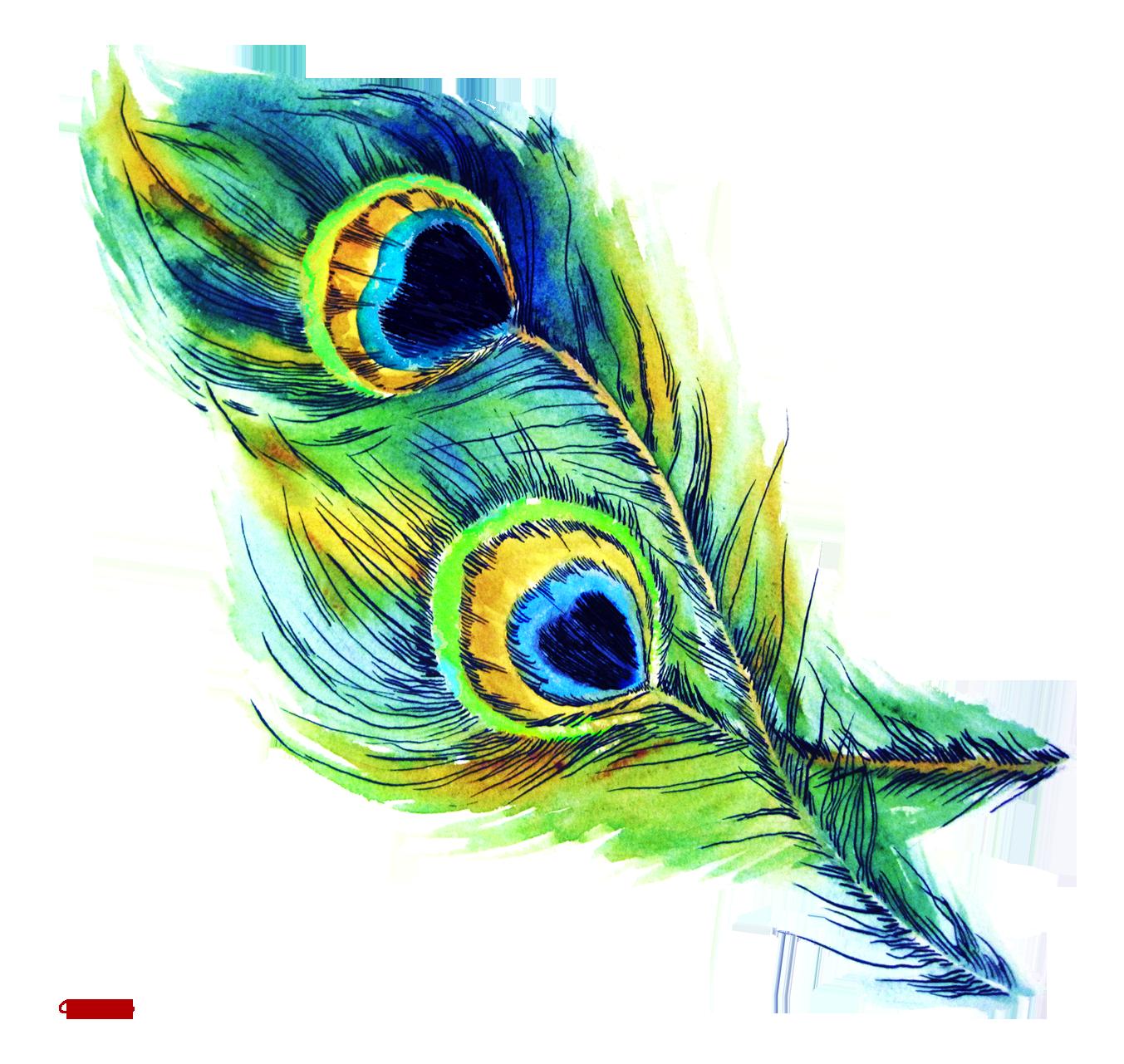 Peacock feather clip art.