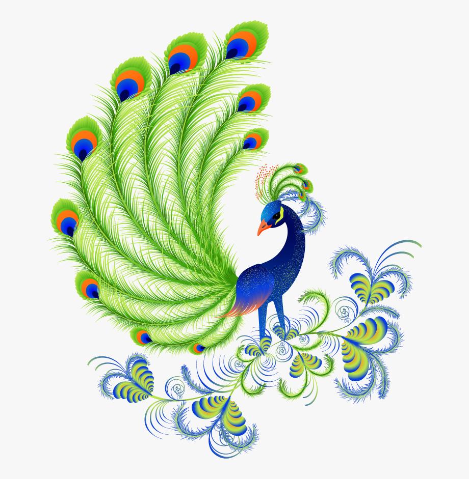 Cartoon Peacock Feathers.