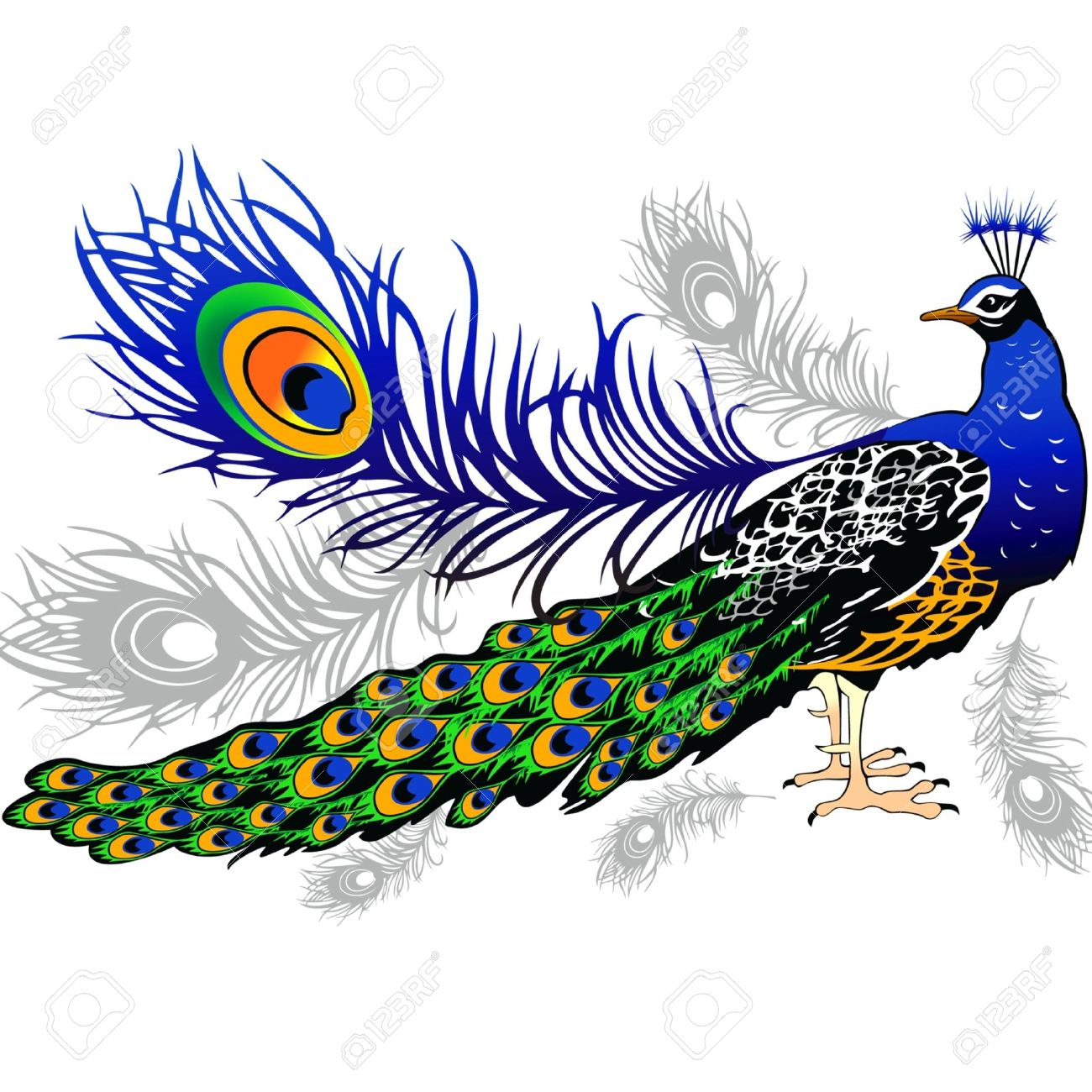 Male Peacock Feathers On The Background Royalty Free Cliparts.