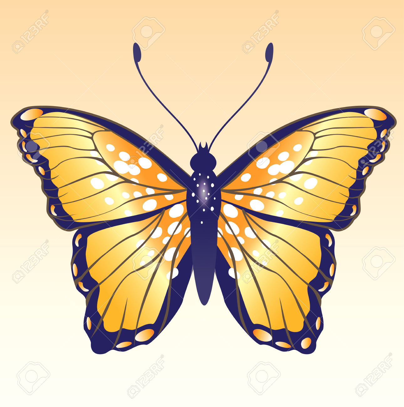 120 Peacock Moth Stock Vector Illustration And Royalty Free.