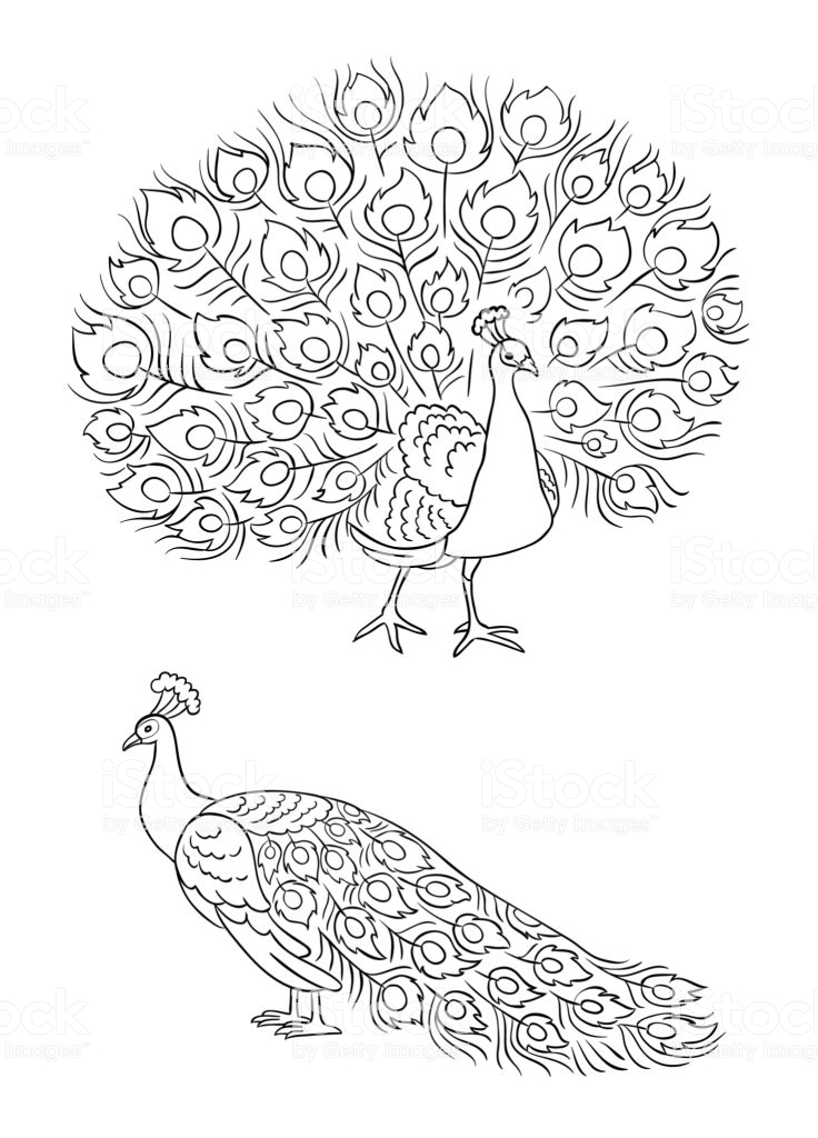 Download peacock outline clipart.