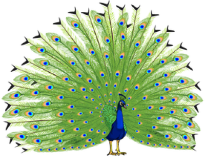 Download Free png Peacock HD PNG Transparent Peacock HD.PNG.