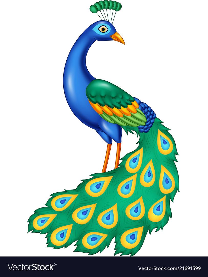 Cartoon beautiful peacock.