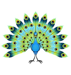 Peacock Vector Images (over 6,500).