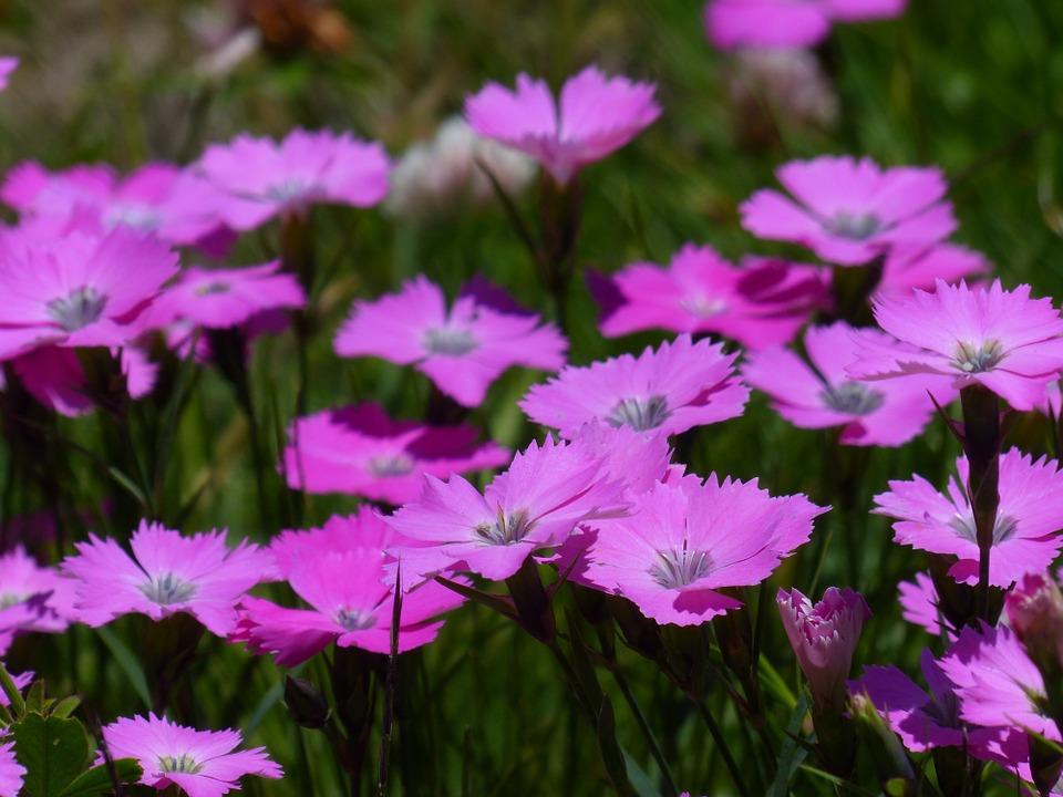 Flower, Carpet.