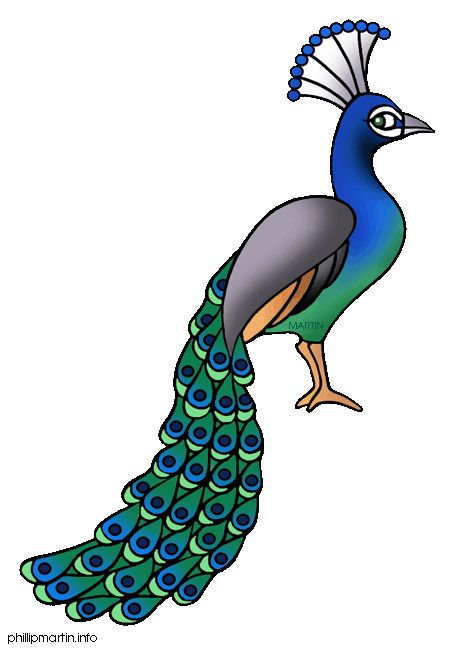 peacock clipart free.