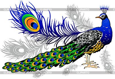 Clip Art of a Peacock.