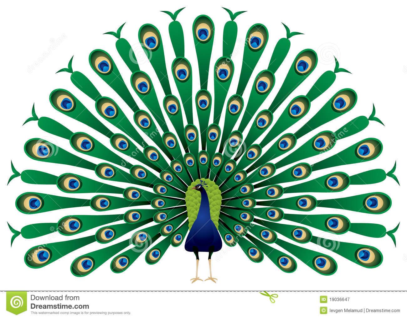 Peacock Clip Art & Peacock Clip Art Clip Art Images.