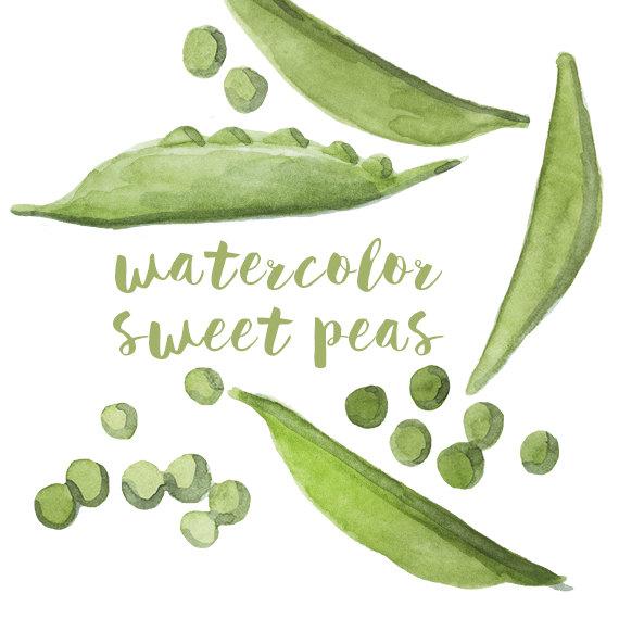 Watercolor Sweet Peas Sweet Pea Clip Art by DigitalPressCreation.