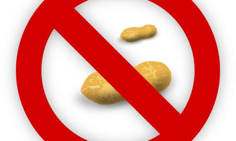 New treatment to protect people with peanut allergies ready.