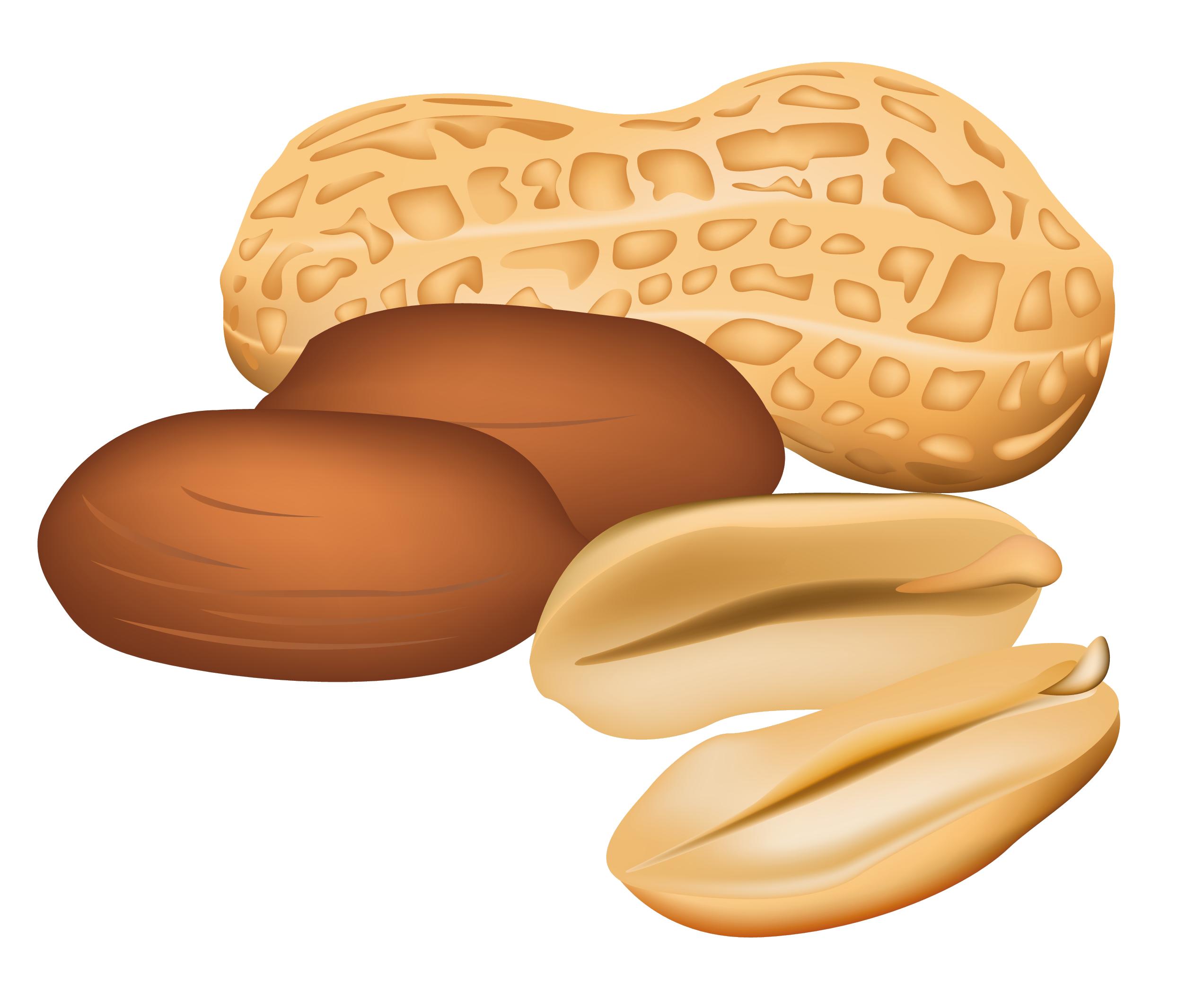 Free Peanut Cliparts, Download Free Clip Art, Free Clip Art.