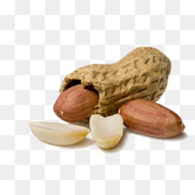 Peanut PNG.