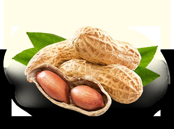 Peanut PNG Photo.