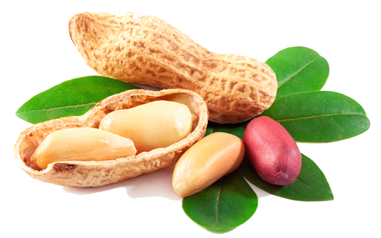 Download Peanut PNG Picture.