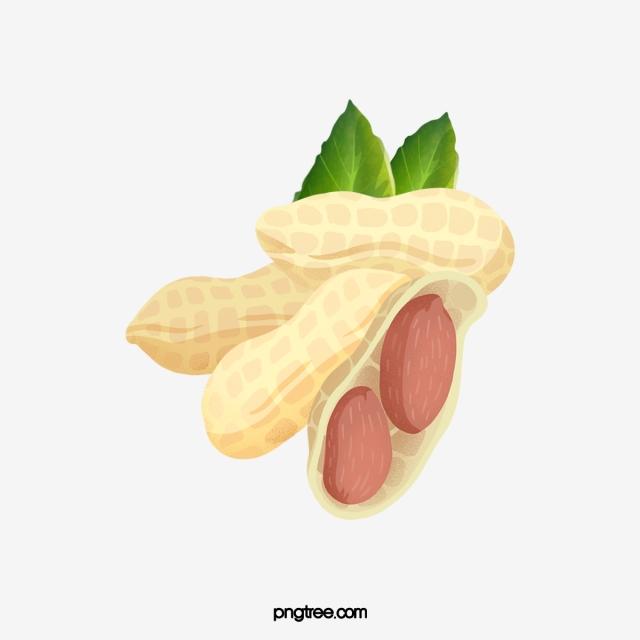 Peanut PNG Images.