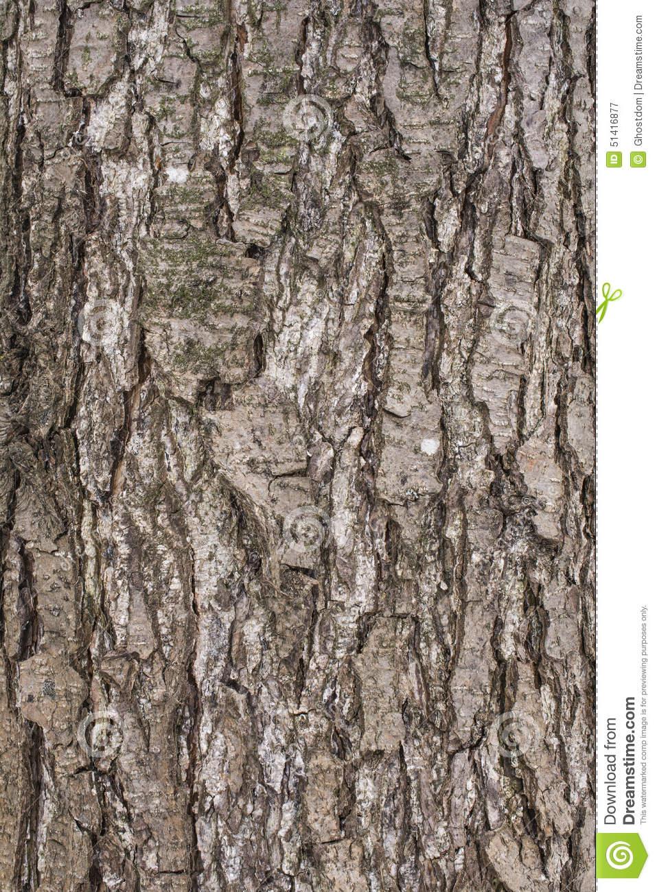 Pear Tree Bark Stock Photo.