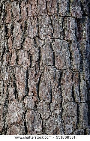 Pear Tree Bark Texture Closeup Stock Photo 118402204.