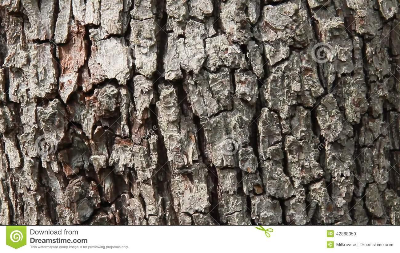 Pear Tree Bark Stock Footage.