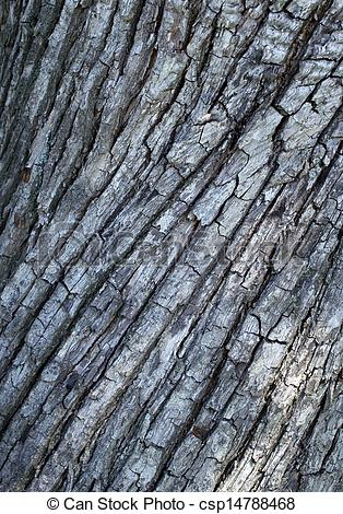 Stock Image of Bark of pear tree closeup background. csp14788468.