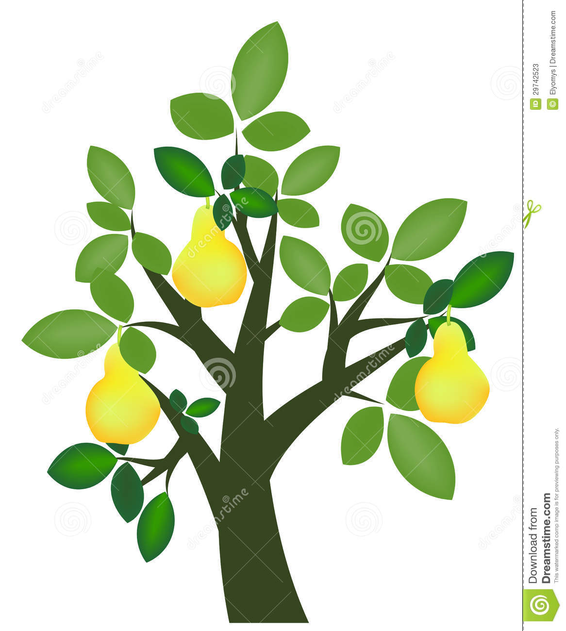 Pear Tree Stock Photos.