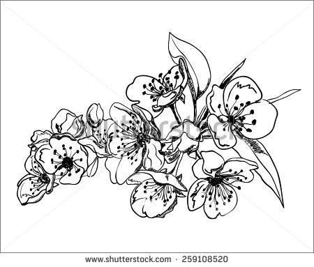 Pear Blossom Stock Vectors, Images & Vector Art.