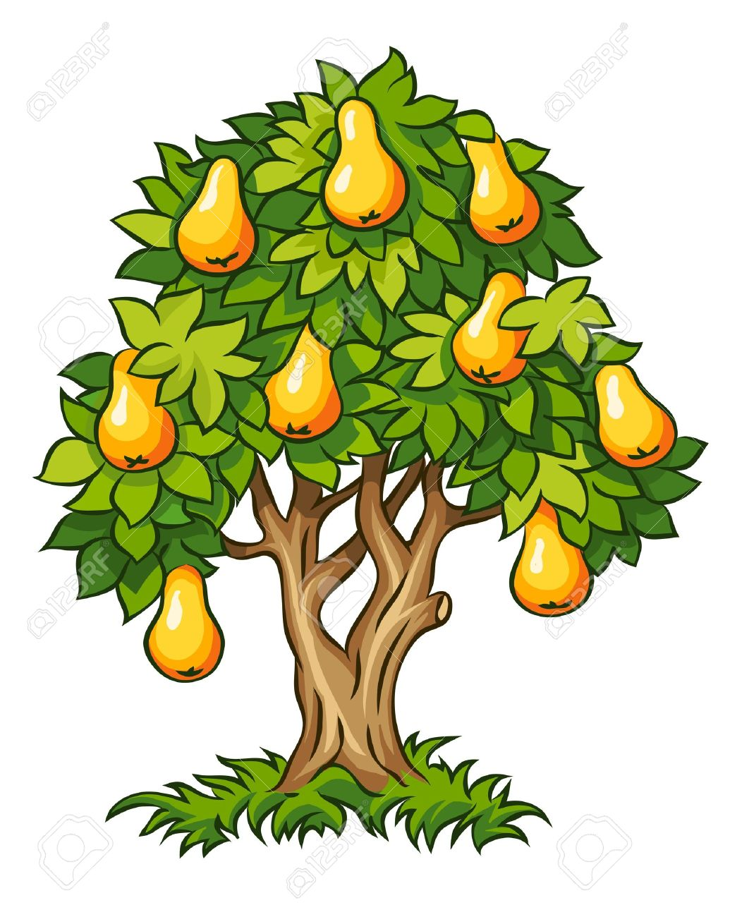 Pear tree clipart - Clipground