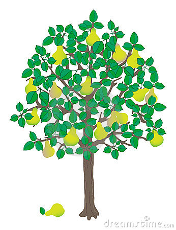 Free clipart pear tree.