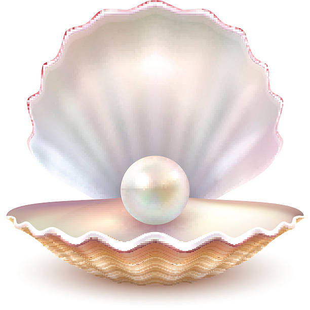 Oyster with pearl clipart 2 » Clipart Station.