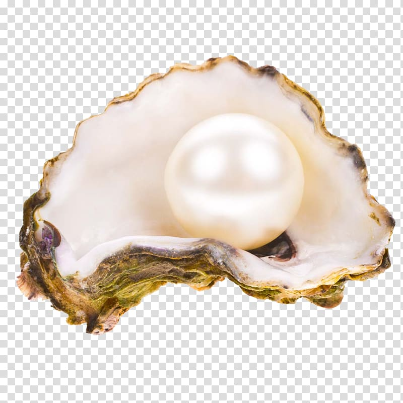 Pearl in shell, Oyster Pearl Seashell , pearl transparent.
