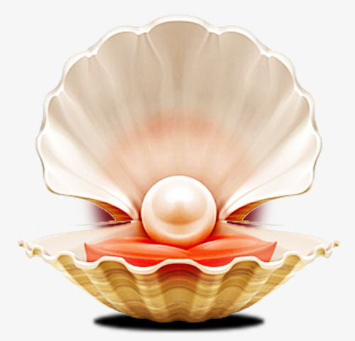 Pearl Shell, Pearl, Shell, Large Pearl PNG and Vector with.
