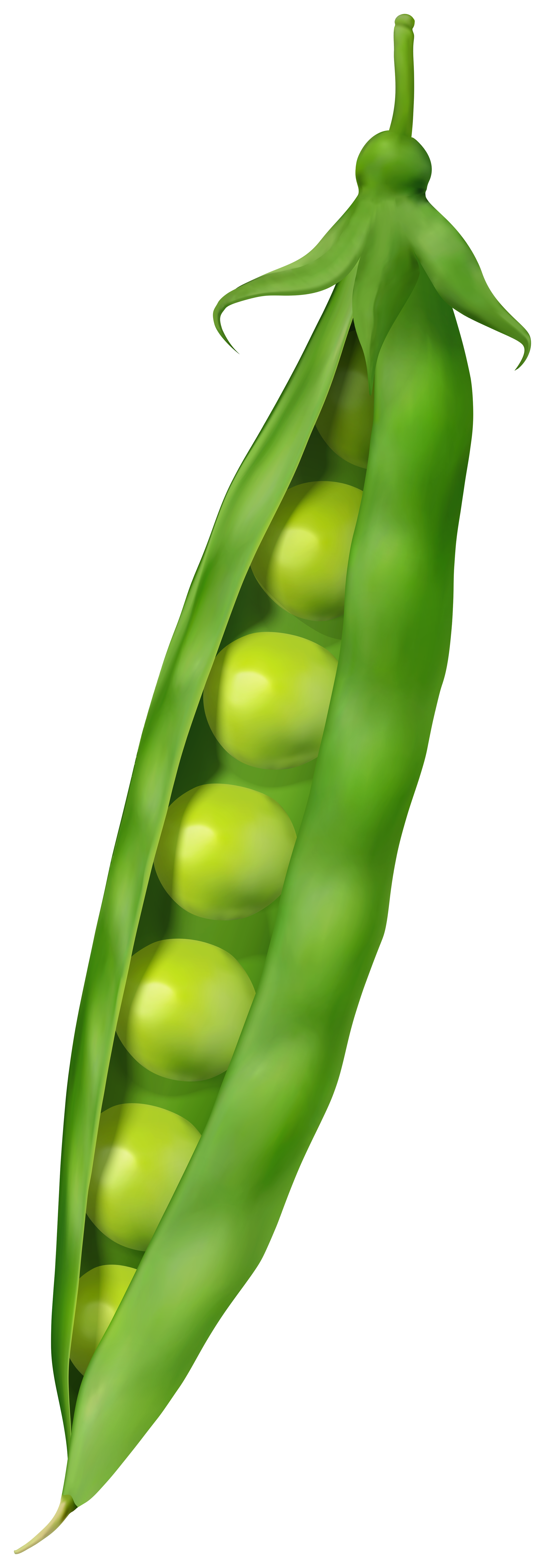 Green Pea PNG Clipart.