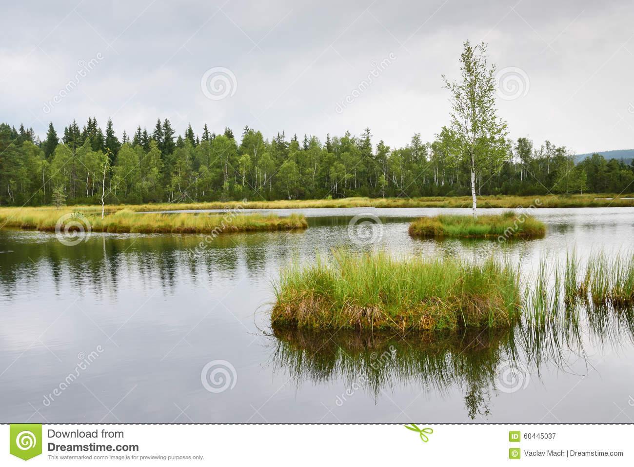 Peat Bog Stock Photo.