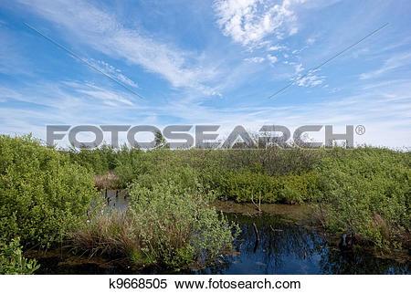 Stock Image of Peat bog k9668505.