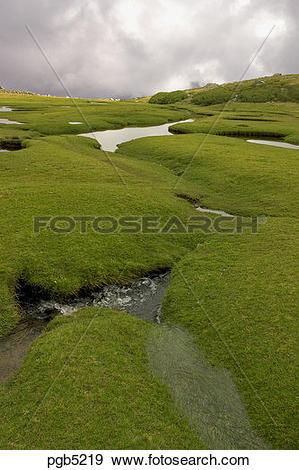 Stock Photograph of Corsica. Pozzis, peat bog, near the Col de.