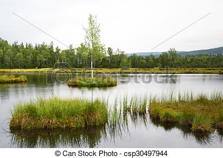 Stock Photo of Peat bog.
