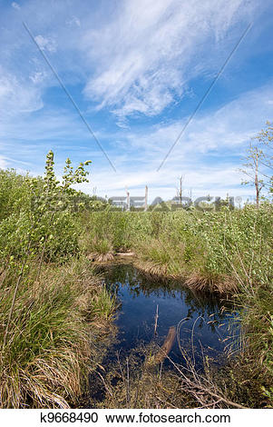 Stock Photography of Peat bog k9668490.