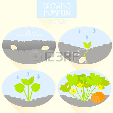 120 Peat Cliparts, Stock Vector And Royalty Free Peat Illustrations.