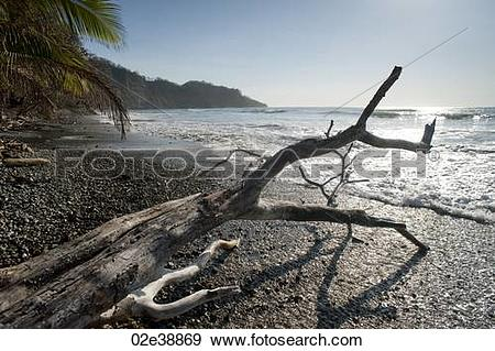 Stock Photograph of Grey driftwood on a pebble beach looking onto.