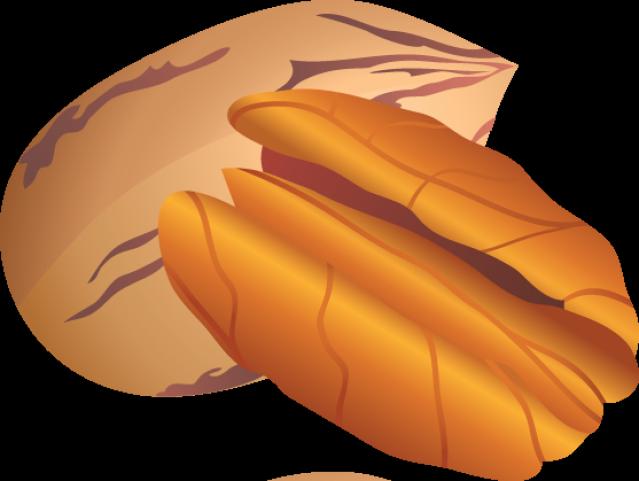 Pecan Nut Clipart.