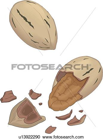 Pecans Clip Art and Illustration. 214 pecans clipart vector EPS.