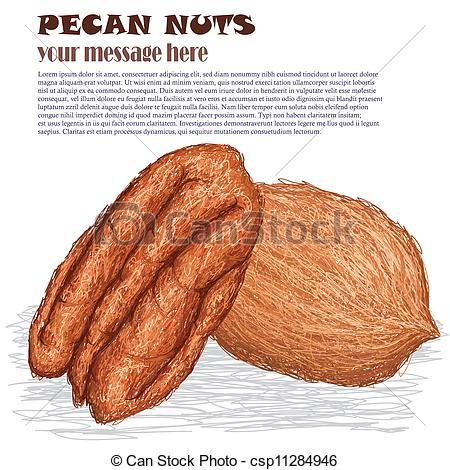 Pecans Clipart Vector Graphics. 242 Pecans EPS clip art vector and.