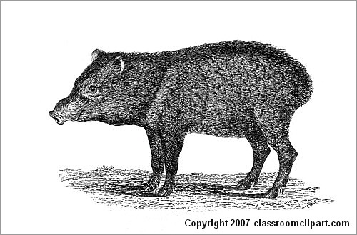Chacoan Peccary : gsm2.