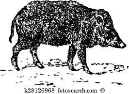 Peccary Clip Art Royalty Free. 9 peccary clipart vector EPS.