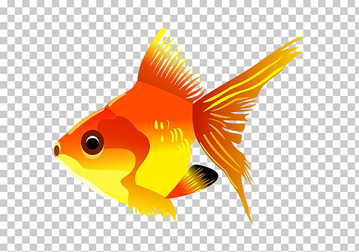 Dibujos animados de peces de colores para peces, peces PNG.