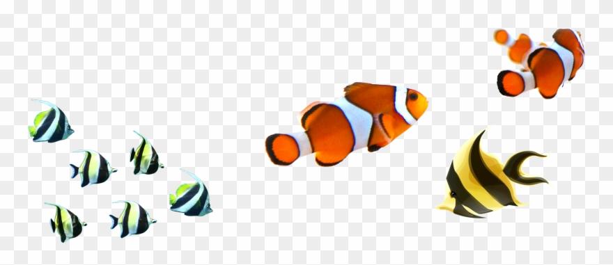 Angelfish Clipart Zebra Fish.