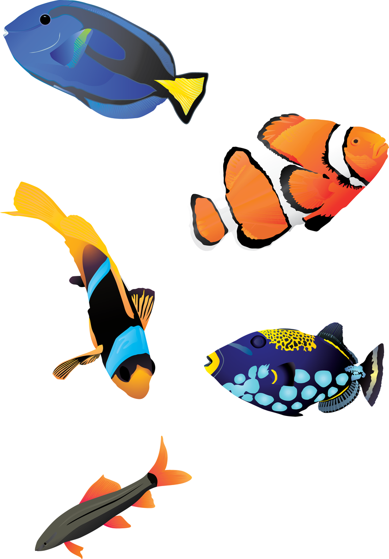 Peces png 7 » PNG Image.