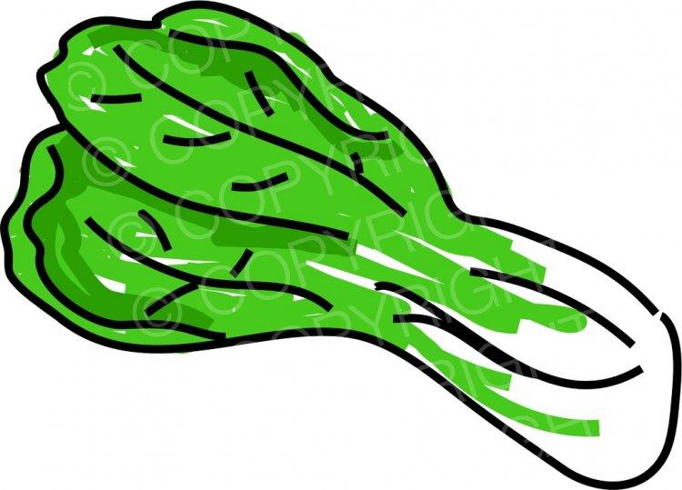 Vegetables clipart pechay, Vegetables pechay Transparent.
